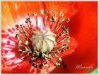 De Rouge et de Pollen