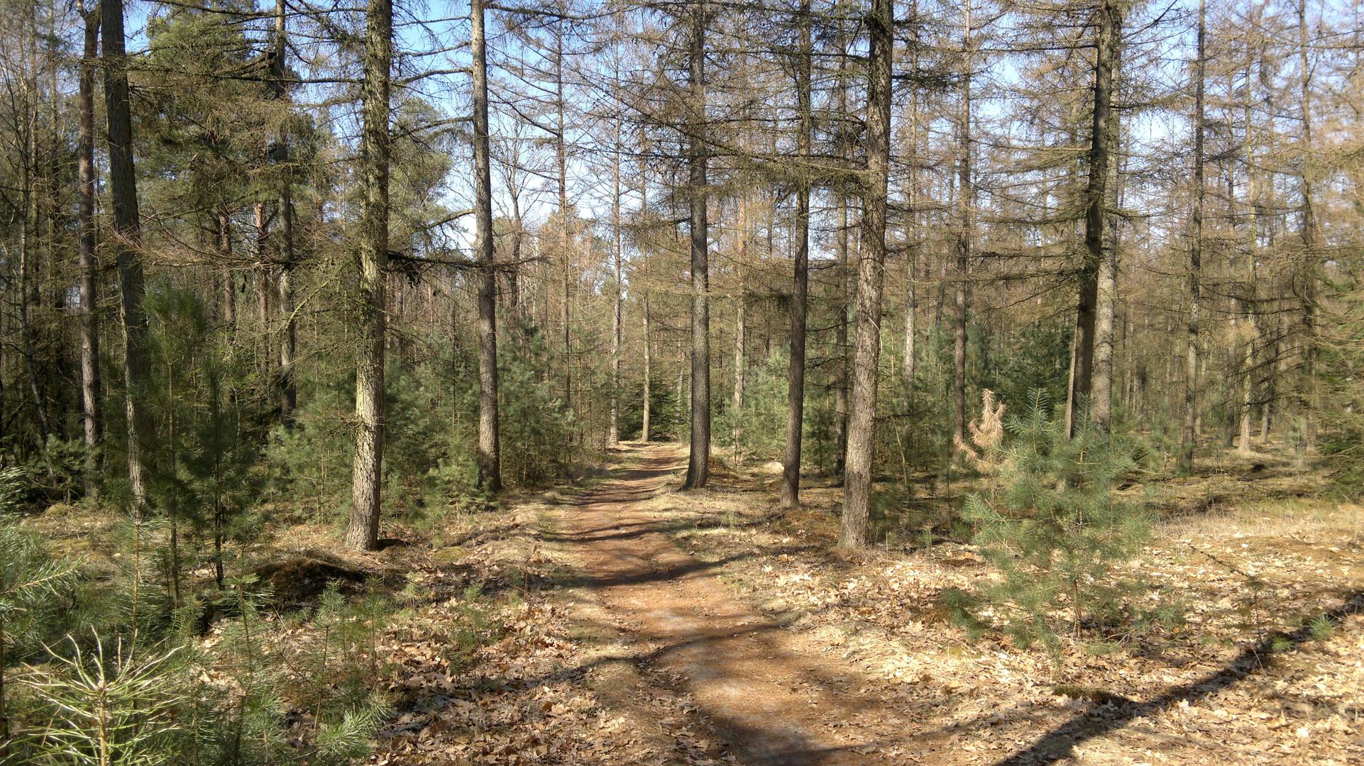 De Sallandse Heuvelrug in Nijverdal ( Twente,Osten von Holland,richtung Nordhorn)
