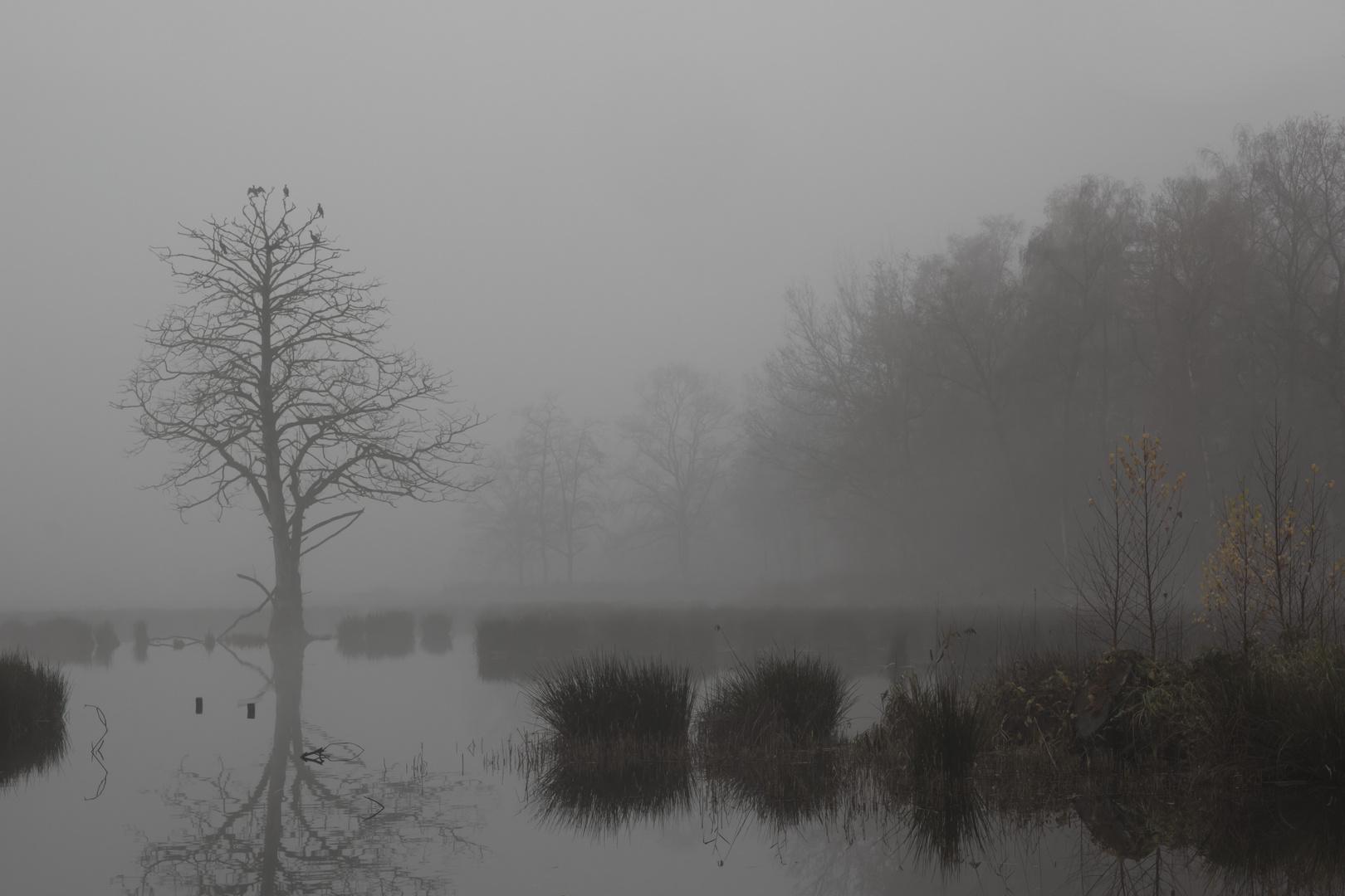 De Wittsee im Frühnebel