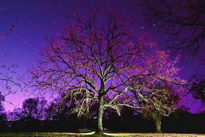 Proyecto Fotos Nocturnas