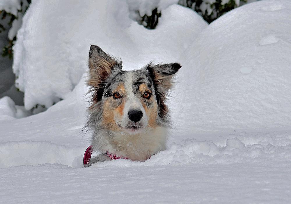 Dea im Schnee