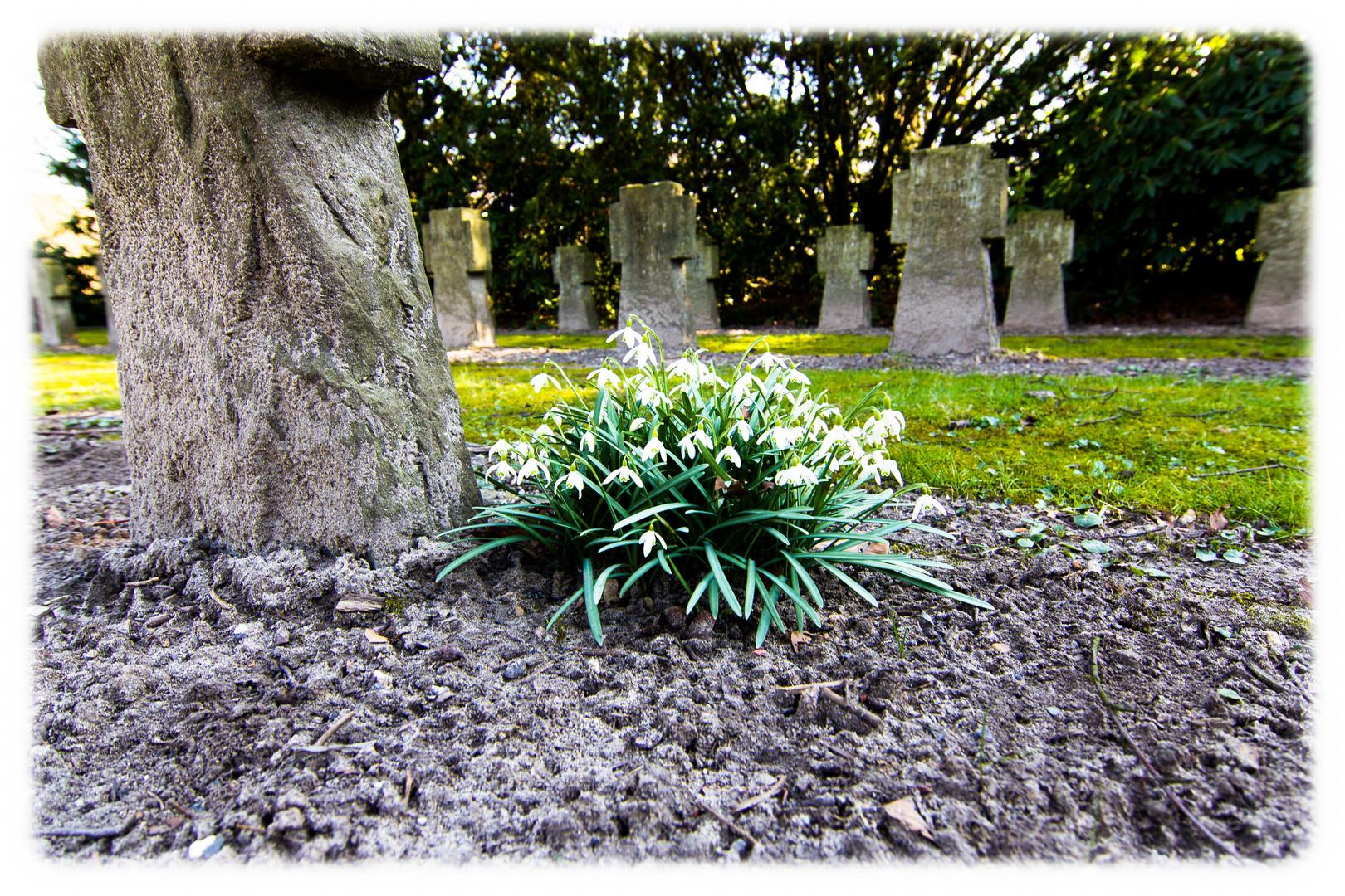 Dead Flowers?