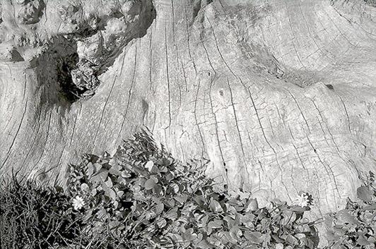 Dead Tree #2