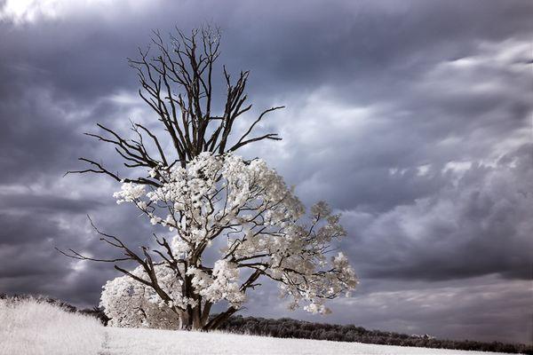 Dead Treetop II
