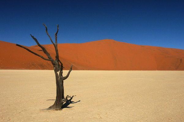 Dead Vlei - Baum mit Herz