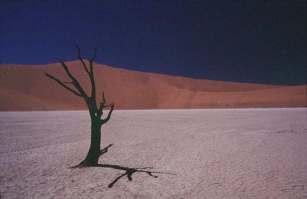 Deadvlei - Lonely Tree