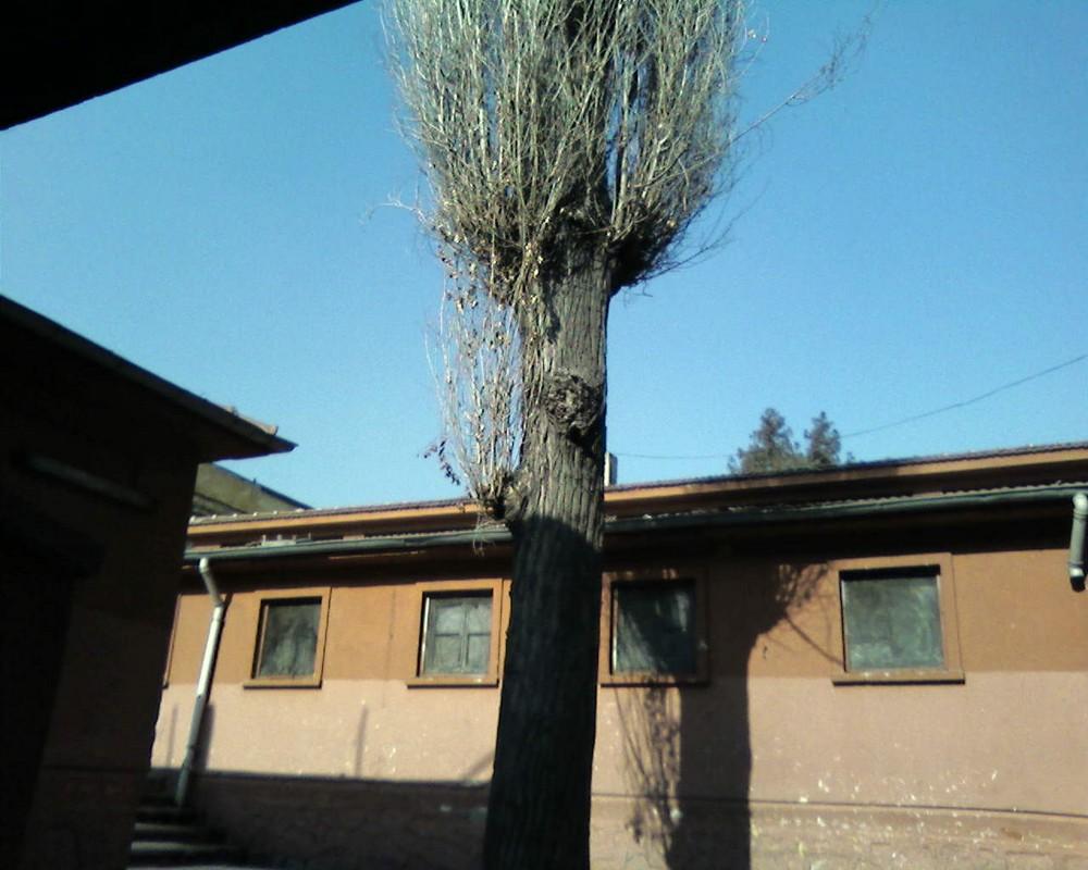 death tree...... ulucanlar