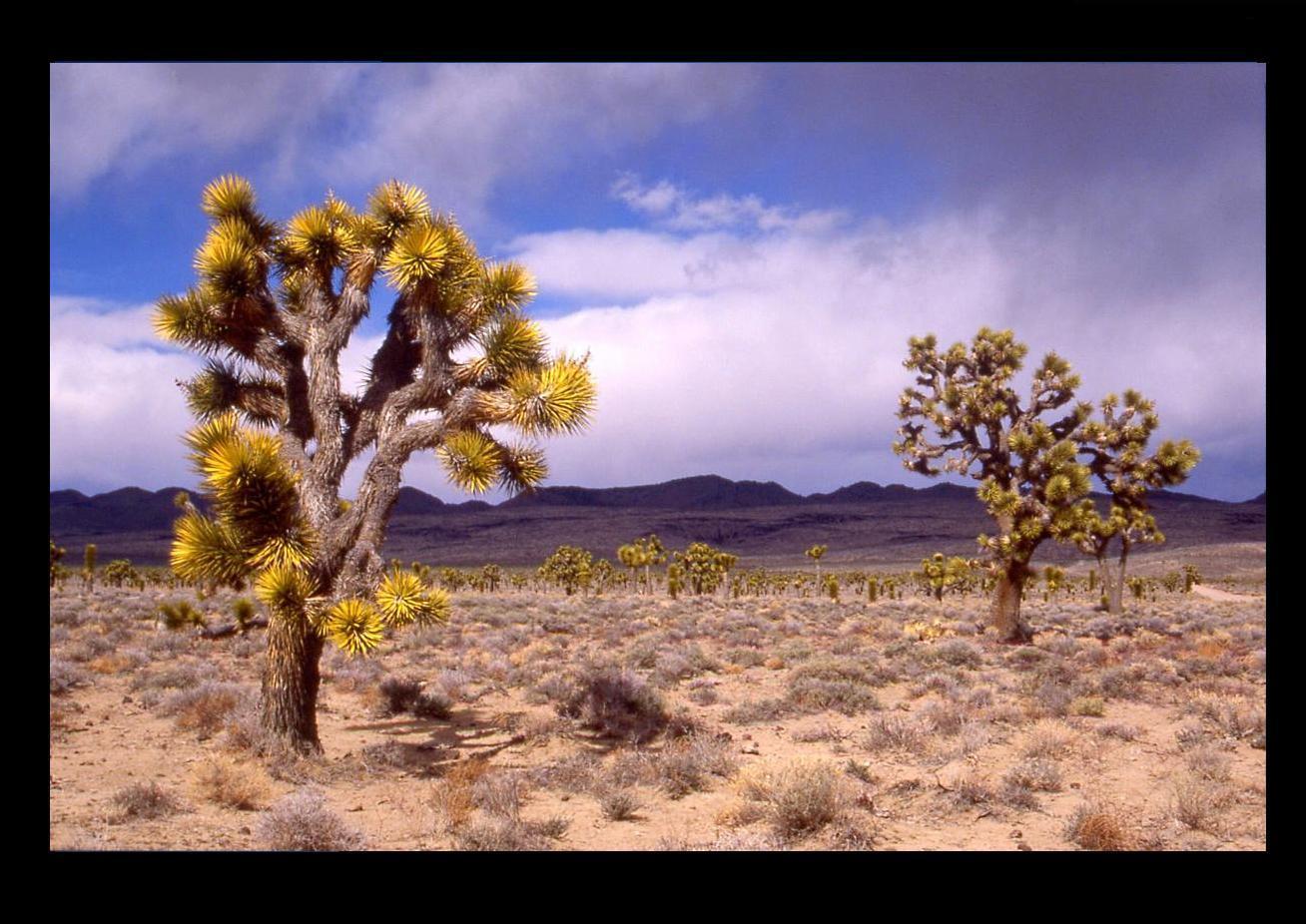Death Valley - Lee Flat -