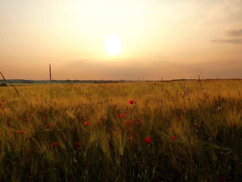 Début de couché de soleil dans les champs