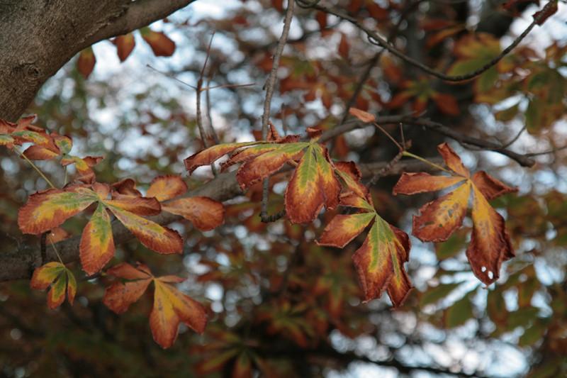 début de l'automne