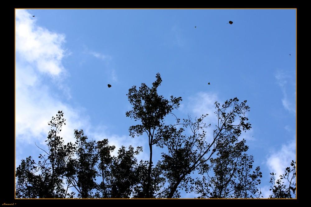 Début de l'automne et déja un tapis de feuilles ...
