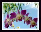 déco en orchidées à l'entrée de la danse du Barong