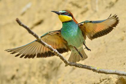 Uccelli allo stato libero