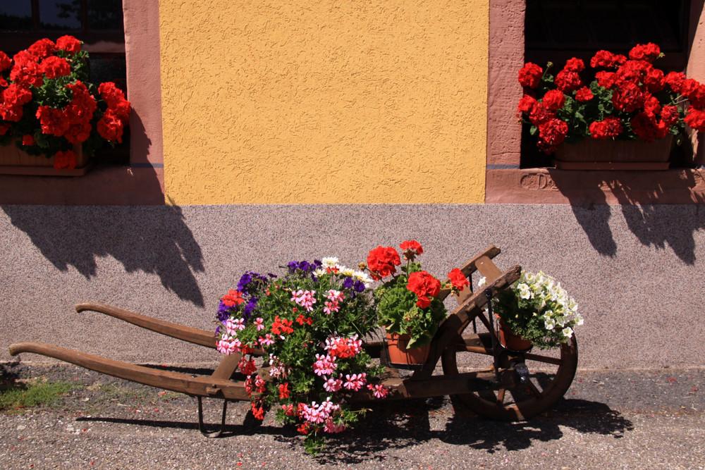 décor floral!