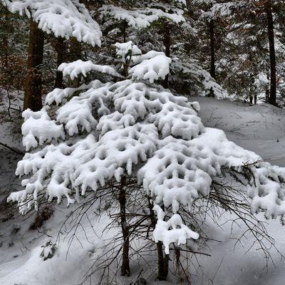 Decoupage invernale