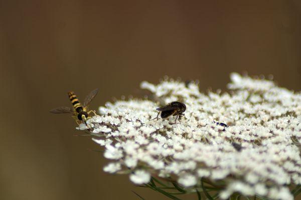 Découverte d'une fleur