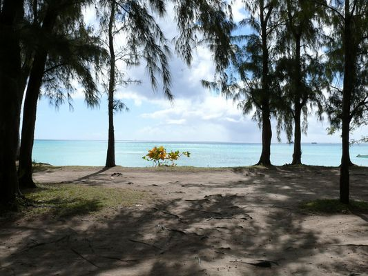 Découverte d'une plage à l'Ile Maurice
