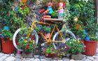 dedicata a Carlo Schicchio : Una bici fiorita