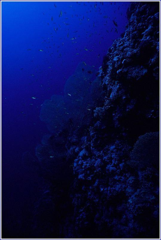 deep blue !!!