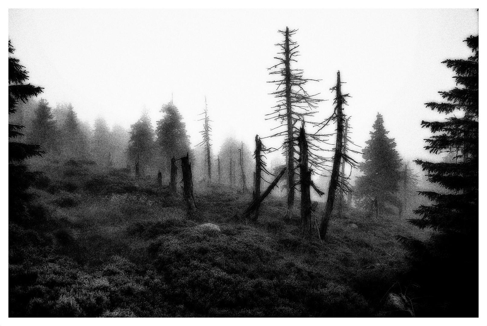 """"""" deep forest """""""