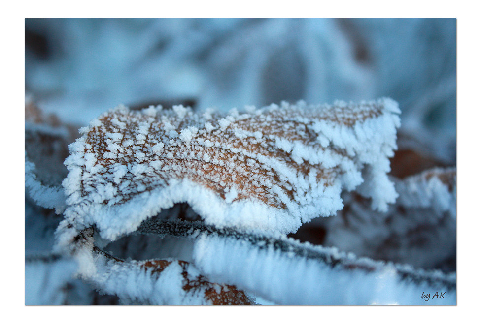 deep frozen leaf