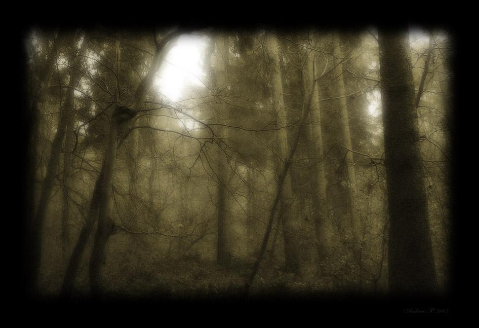 Deep in the forgotten Woods II