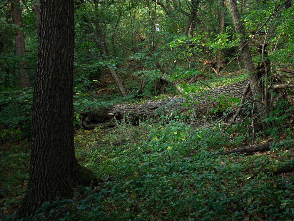 Deep In The Woods in Thüringen