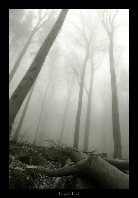 deep woods, part 2