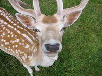 deerhunter88