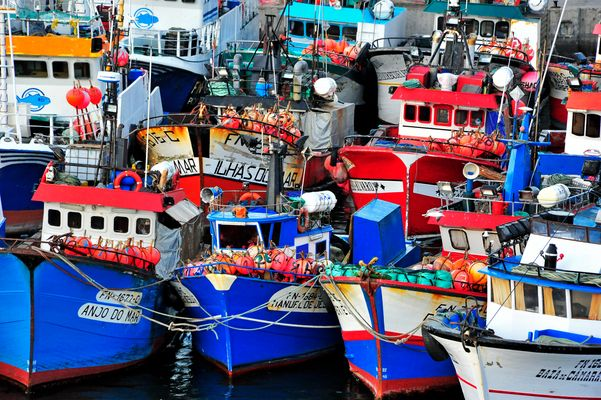 Degenfischfischer Funchal