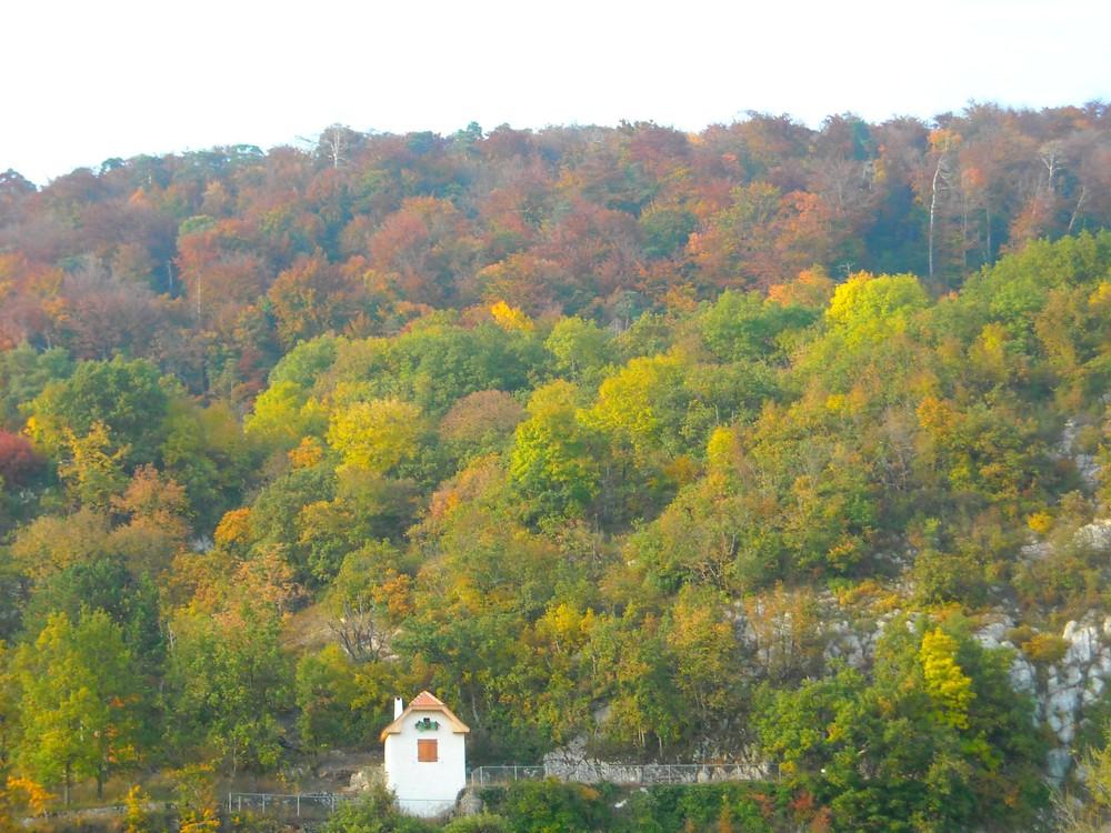 Dégradé d'abres en automne