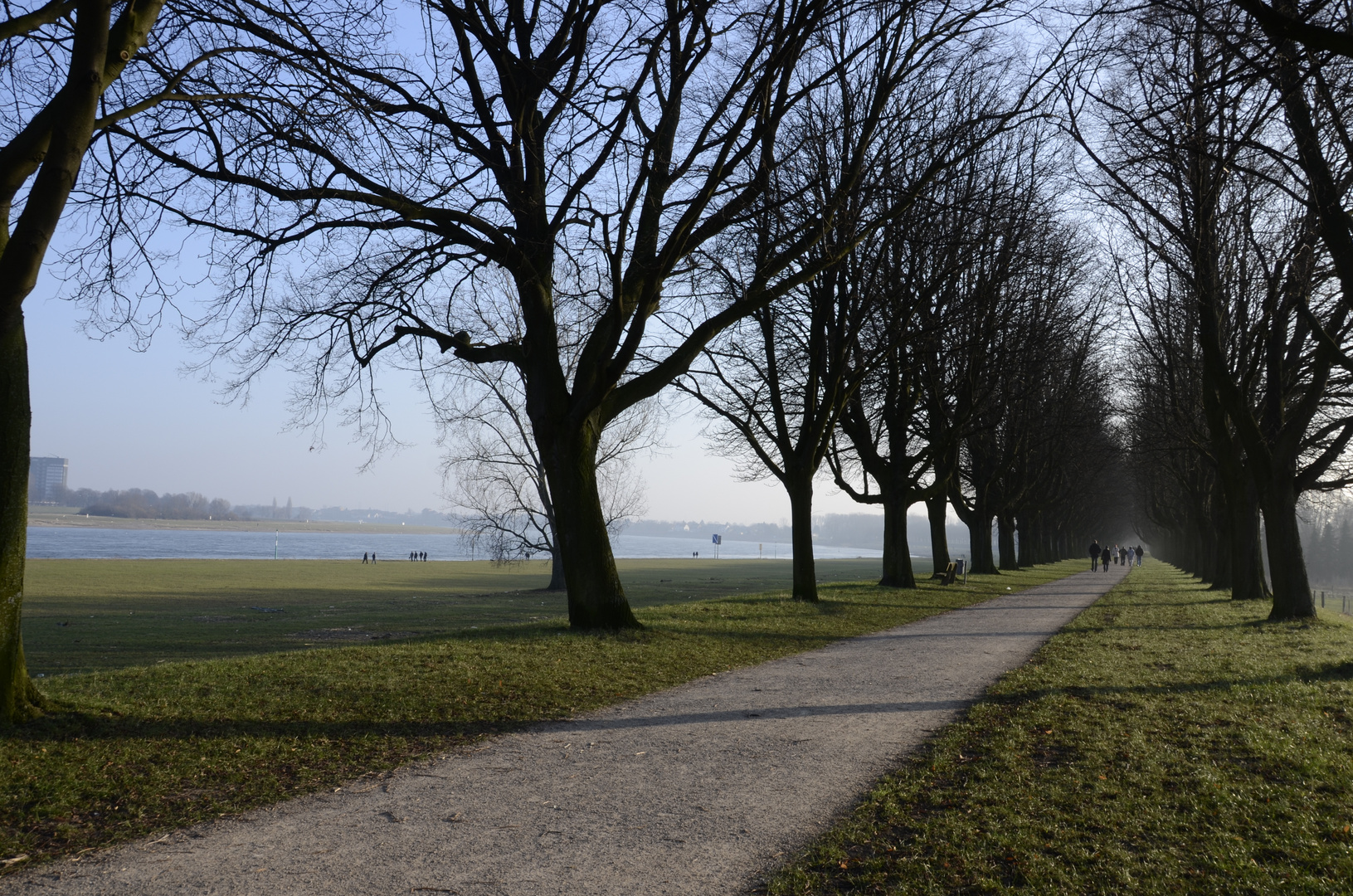Deichallee am Rhein bei Neuss