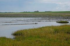 Deichvorland / Salzwiesen mit gefluteten Grüppen