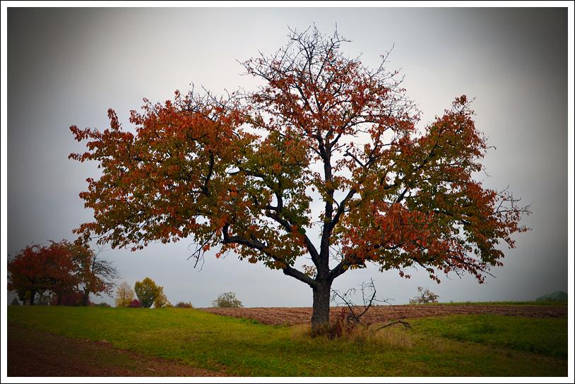 Dein Baum.