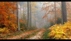 Dein Herbst