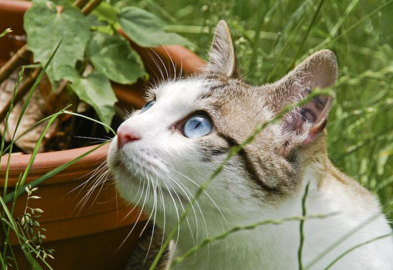 Deine blauen Augen ...