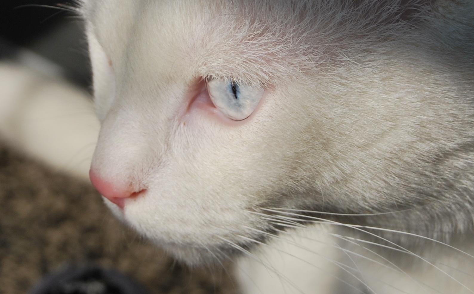 Deine blauen Augen....