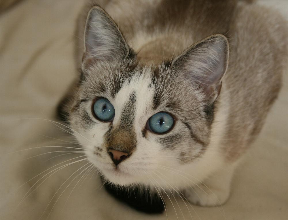 Deine blauen Augen...