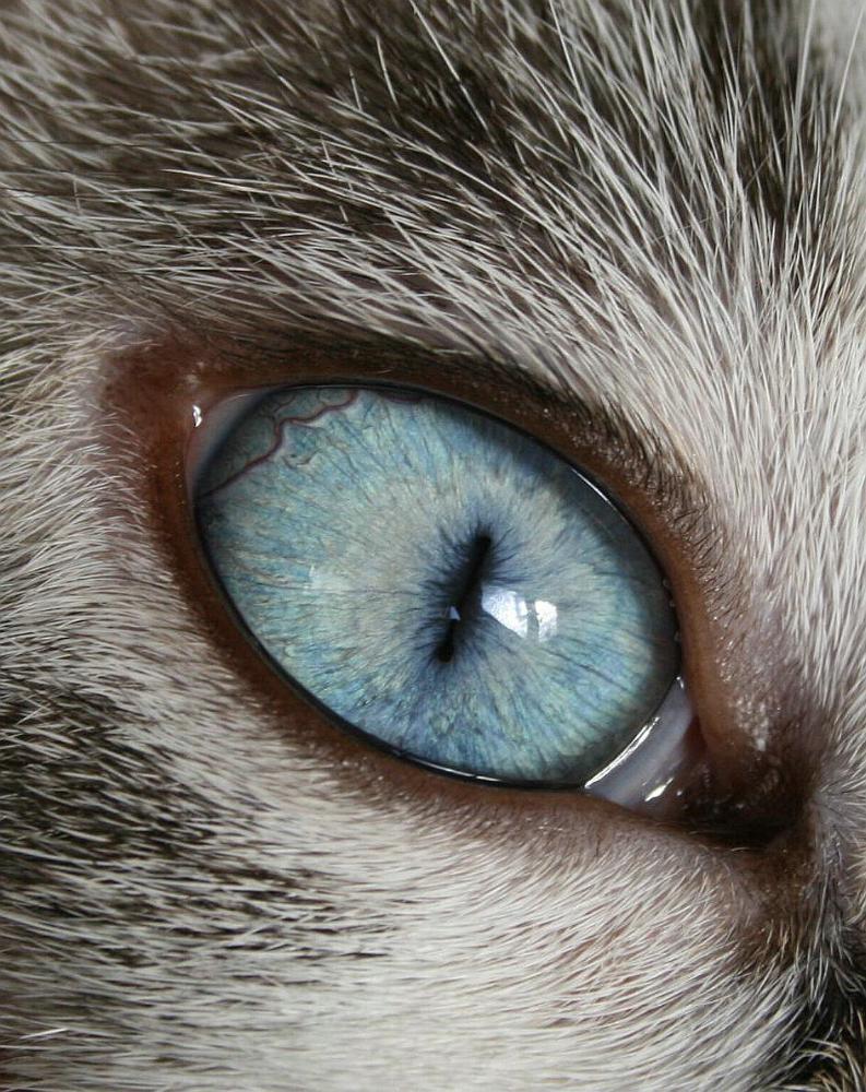 Deine blauen Augen... Teil2