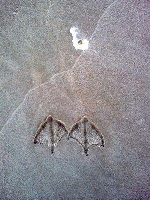 """""""Deine Spuren im Sand ..."""""""