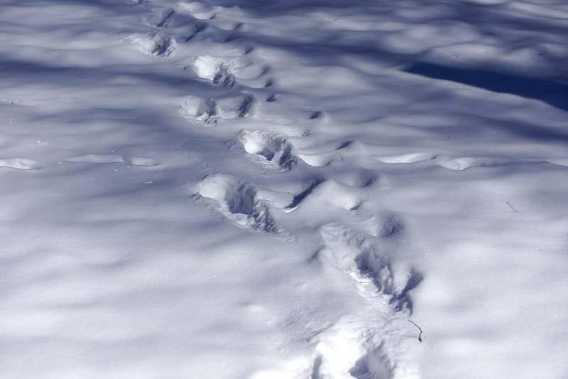 Deine Spuren im Schnee...