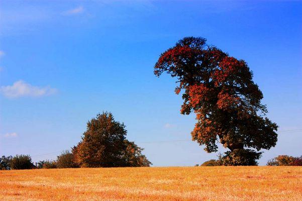 déjà l'automne