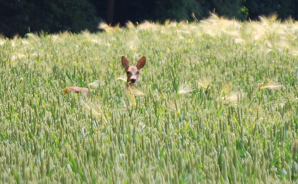 dejeuner sur l'herbe