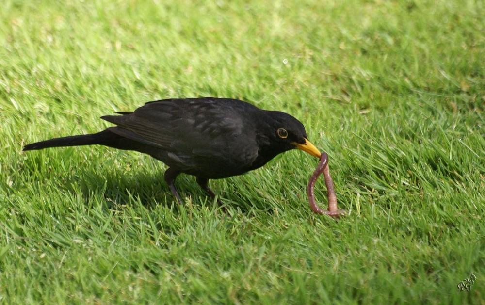 Déjeuner sur l'herbe .....