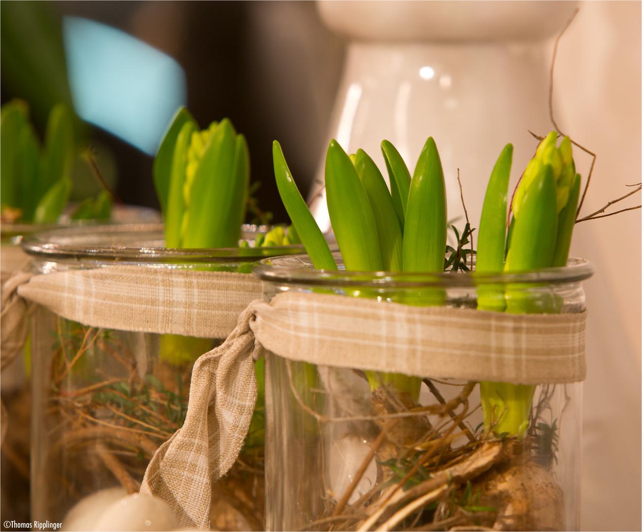Deko für den Frühling....