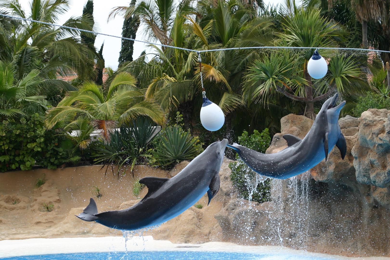 Delfin-Akrobatik