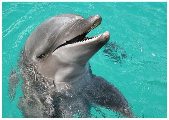Delfin auf Palau