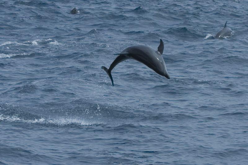 Delfin (Galapagos)