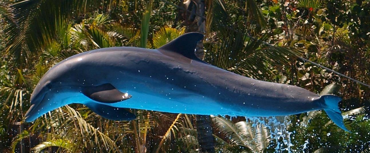 Delfin im Sprung