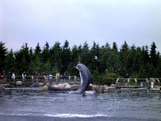 Delfin-Rolle